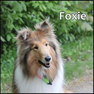 dave chomitz dog foxie cobourg real estate